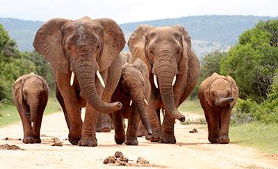 Foto bij reizen op maat Afrika