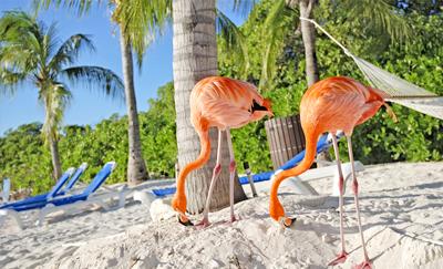 Foto Aruba bij Zonvakantie